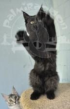 Кот на задних лапах.