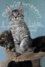 Нас двое котят.