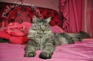 Кот и подушка в форме розы.