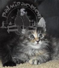 Аssol и черный котенок.