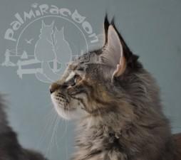 Профиль конкретной кошки.