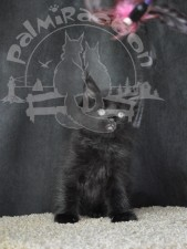 Не дразните черного котенка.