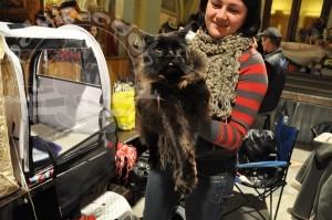 Черный кот майн-кун на руках незнакомки.