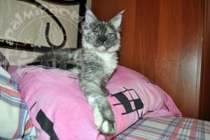 Азула на подушке.