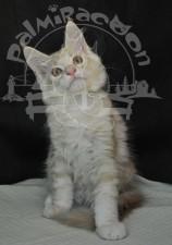 Котик на фото.