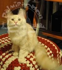 Рыжий кот на коврике.