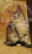 Кот на плитке.