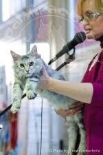Выступление с котом.