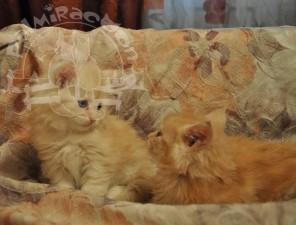 Кошачьи разговоры.