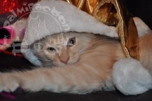 Котенок в шапочке.