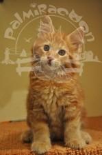 Милашка котенок.