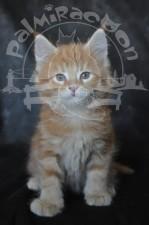 Я, котенок, рыженький.