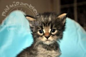 Совсем маленький котенок.