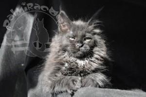 Черный кот на черном фоне.