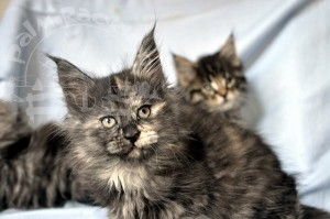 Котейки, и все симпатяшки.