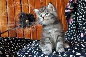 Котенок и палочка с перышками.