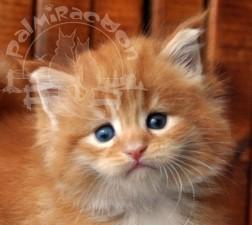 Вот что значит красота по кошачьи)