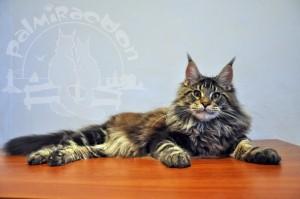 Котик отдыхает на столе.