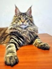Кот повелевает миром.