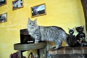 Кот на фоне стены и картин.