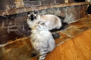 Самые красивые представители кошачьего племени.