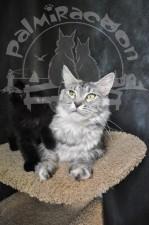 Кuba и черный котенок.
