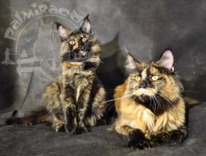 Они прекрасны. Кошки.